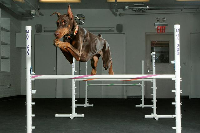 Recognizing the Importance of Agility in Big Data and Choosing the Right Vendor